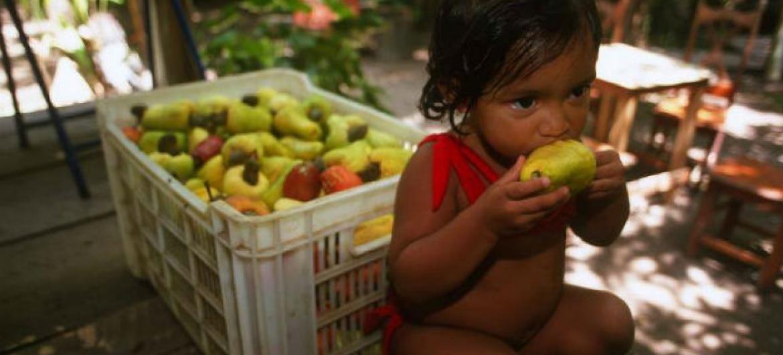 O processo de radiação das frutas tem ajudado a combater pragas. Foto: FAO/Giuseppe Bizzarri