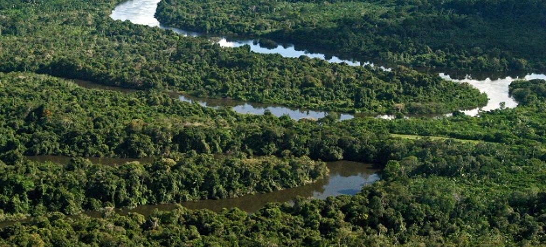 Programa é o maior trabalho de conservação de florestas tropicais na história. Foto: Arquivo AG