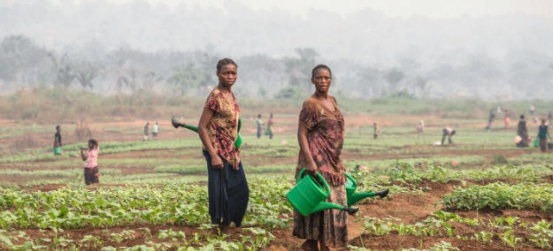 Agricultores em Kassai, RD Congo. Foto: FAO/Junior D Kannah