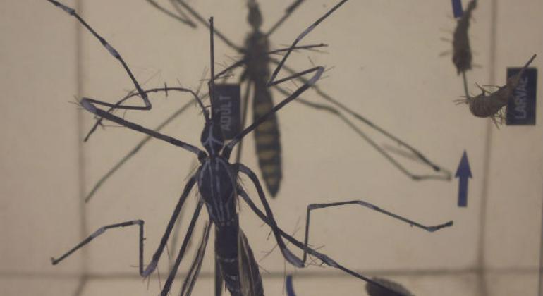 O ano em que a zika assustou o mundo. Foto:Irin/Kate Mayberry