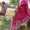 Ciência nuclear ajuda sudanesas a transformar terras secas em campos de vegetais. Foto: Aiea/N. Jawerth