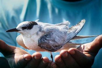 Dia Mundial das Aves Migratórias. Foto: OMT