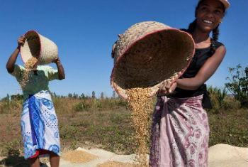 Escritório apoia projectos regionais. Foto: FAO