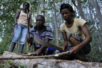 Florestas são meios de subsistência vital para comunidades. Foto: FAO