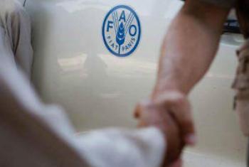 Apoio humanitário é fundamental. Foto: FAO