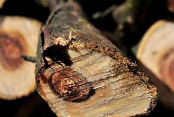Comércio ilegal de madeira. Foto: Pnuma