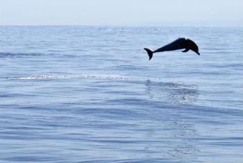 Plástico acumulado pode aprisionar golfinhos e baleias. Foto: ONU/Martine Perret
