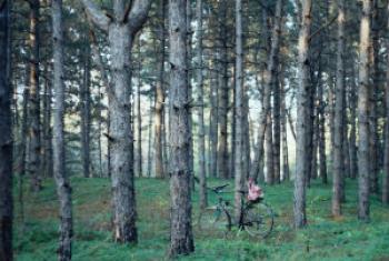 Fórum da ONU sobre Florestas teve início nesta segunda-feira. Foto: ONU/Olga Lavrushko