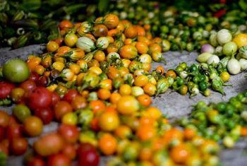 Combate ao desperdício alimentar. Foto: FAO