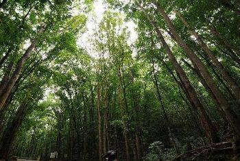 As florestas são essenciais para alcançar segurança alimentar.Foto: FAO/Noel Celis