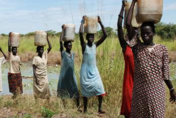 Sul-sudaneses a enfrentar crise alimentar. Foto: FAO