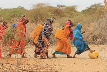 A Seca é um dos fatiores por detrás da crise alimentar somali. Foto: FAO