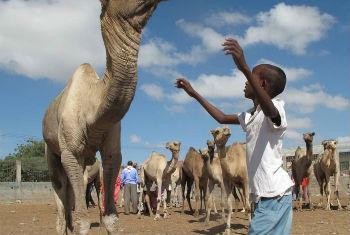 Civis enfrentam inseguran;a alimentar grave. Foto: FAO/Frank Nyakairu