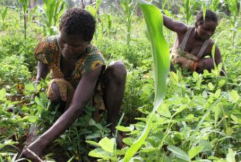 Agricultores na República Centro-Africana. Foto: FAO/A. Masciarelli