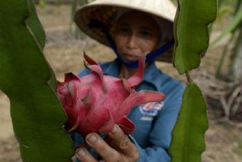 Inovação na agricultura familiar. Foto: FAO/Hoang Dinh Nam