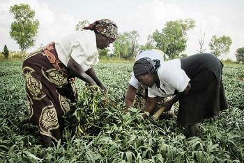 Investimentos para aumentar o acesso à comida em Moçambique. Foto: PMA/Moçambique