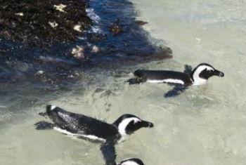 Ecossistemas marinhos ameaçados. Foto: Pnuma