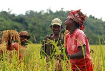 Avanços na agricultura. Foto: Banco Mundial