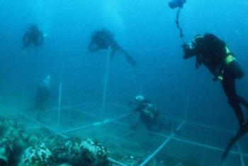 Missão da Unesco investiga destroços de barco no fundo do mar. Foto: Unesco
