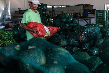 Índice de preços dos alimentos estável. Foto: FAO