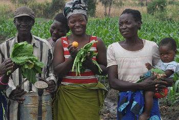 Moçambique cancela registo de vários pesticidas. Foto: FAO