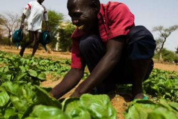 Desenvolvimento rural. Foto: FAO
