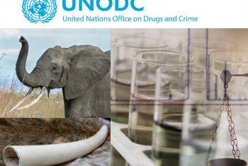 Combate à caça ilegal de elefantes. Imagem: Unodc