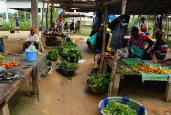 Foto: FAO/Libéria