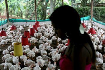 Mulher na Colômbia. Foto: Banco Mundial/Charlotte Kesl