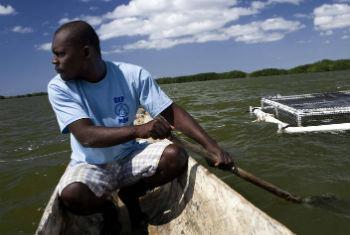 Homem haitiano rema em direção à sua criação de peixes. Foto: FAO/Luca Tommasini