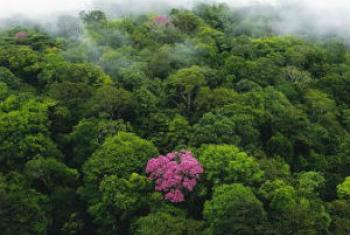 Conservação das florestas. Foto: Pnuma
