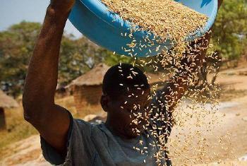 Serviços também ajudam agricultura Foto: FAO/Olivier Asselin