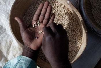 Iniciativa vai beneficiar 25 mil famílias no Mali. Foto: FAO
