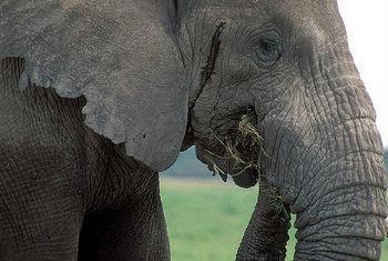 Crimes da vida selvagem. Foto: Banco Mundial/Curt Carnemark