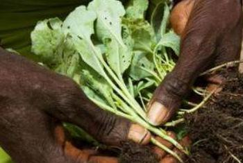 Segundo representante da FAO, os solos mantêm 95% da produção de alimentos. Foto: FAO