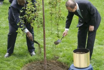 Ban Ki-moon (à dir.) e Sam Kutesa plantam árvore na sede da ONU. Foto: ONU/Mark Garten