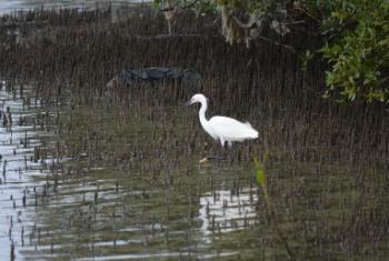 Dia Internacional da Biodiversidade é celebrado neste 22 de maio.Foto: Rádio ONU/Ouri Pota