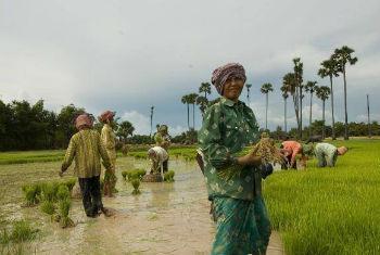 O Nepal corre o risco de entrar num longo período de insegurança alimentar.Foto: FAO/A.K.Kimoto