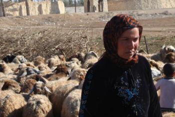 Conflio afetou de forma severa o setor da pecuária. Foto: FAO/Tahseen Ayyash