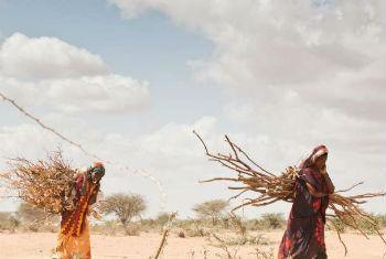 Mudança climática contribui para seca em África.