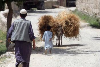 Um agricultor afegão e seu filho trazendo trigo da colheita. Foto: FAO/Giuilio Napolitano