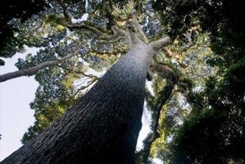 Florestas cobrem 35% das terras de África. Foto: FAO/Giulio Napolitano.