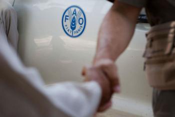 Cooperação de Angola para promover a segurança alimentar. Foto: FAO