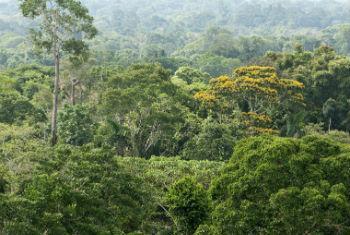 Conservação dos ecossistemas. Foto: Pnuma