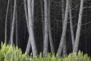 Florestas podem ajudar no combate à mudança climática. Foto: FAO/Giulio Napolitano