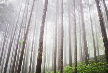 Congresso Florestal Mundial teve início esta segunda-feira em Durban, na África do Sul. Foto: ONU