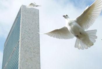 Pombas da paz sobrevoam ao redor da sede da ONU. Foto: ONU/Mark Garten (arquivo)