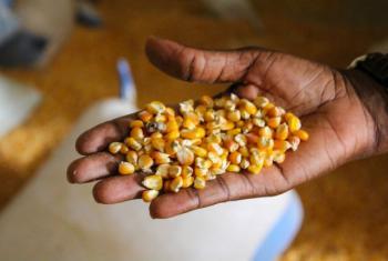 Os especialistas dizem que se deve investigar ingredientes além dos cereais habituais como o milho e o trigo. Foto: Banco Mundial/Daniella Van Leggelo-Padilla