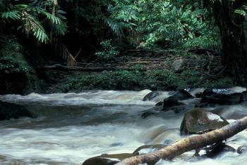 Sustentabilidade do meio ambiente é prioridade do governo guineense.Foto: Banco Mundial