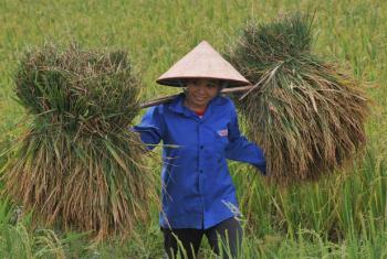 Recenseamentos são fundamentais para os governos implementarem políticas para impulsionar o desenvolvimento agrícola e rural.Foto: FAO